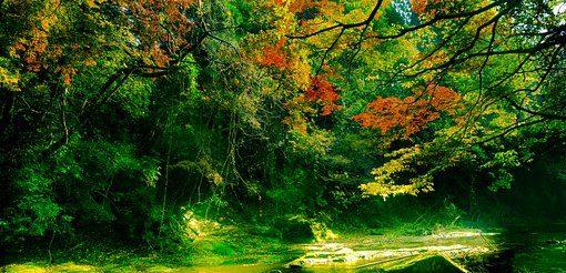森の中で川のせせらぎ